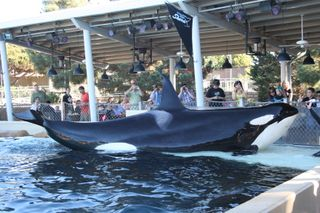 Sea World 11-26-09 197