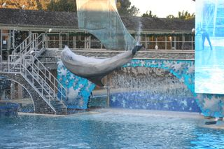 Sea World 11-26-09 254