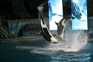 Sea World 11-26-09 291