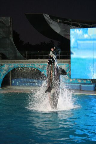 Sea World 11-26-09 284