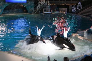 Sea World Day 2 241