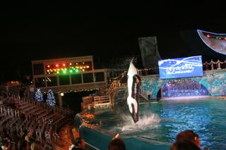 Sea World Day 2 298