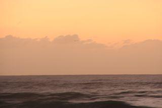 Beach Day....11-28-09 051