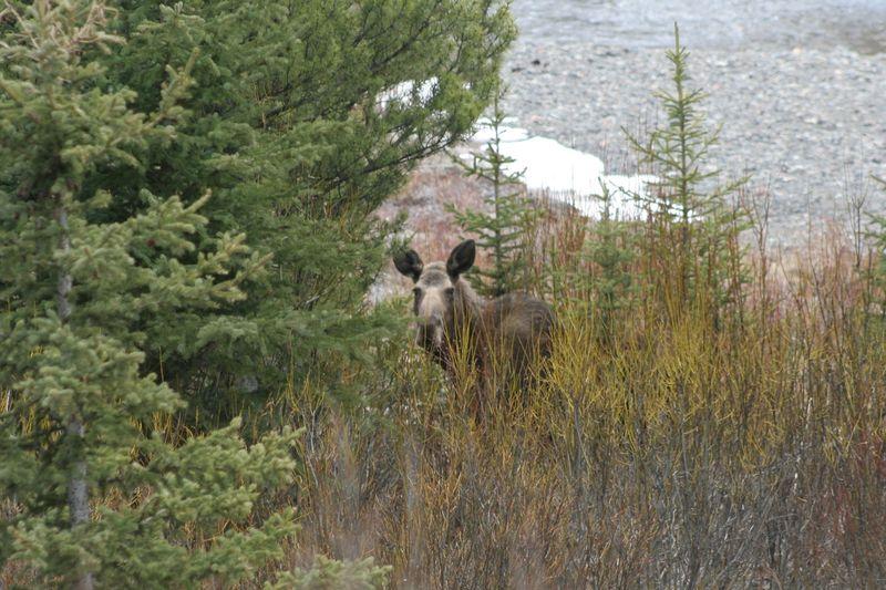 Yellowstone 5-16-10 135