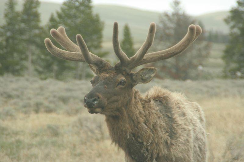 Yellowstone 5-19-10 013