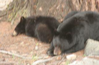 Yellowstone 5-19-10 143
