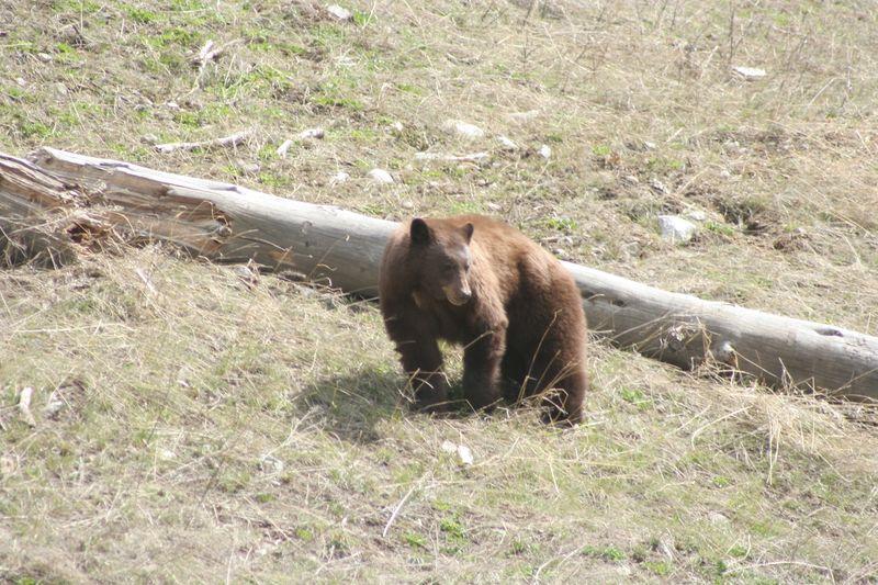 Yellowstone 5-16-10 061