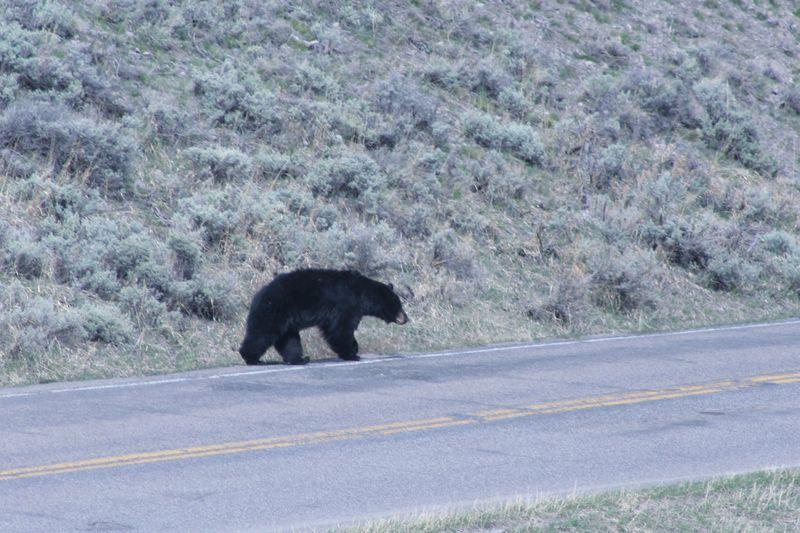 Yellowstone 5-16-10 200