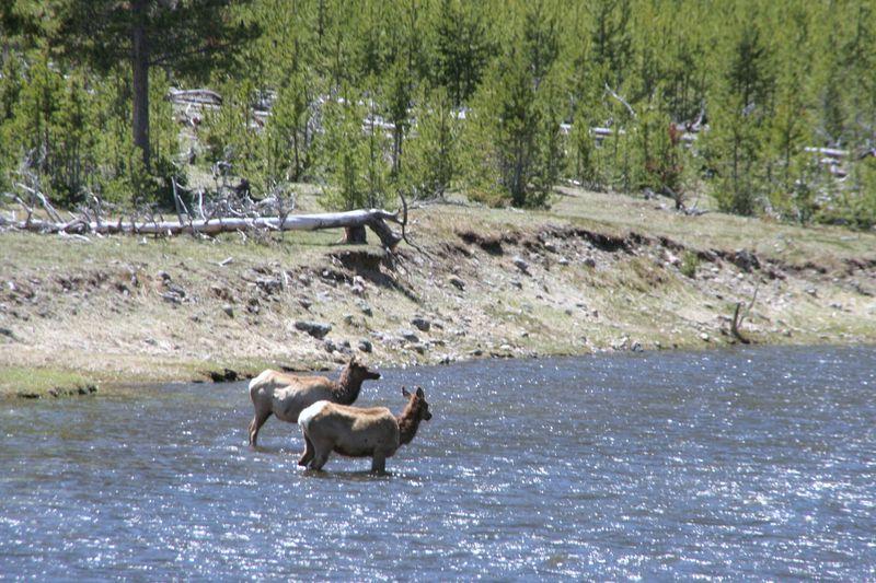 Yellowstone 5-17-10 026