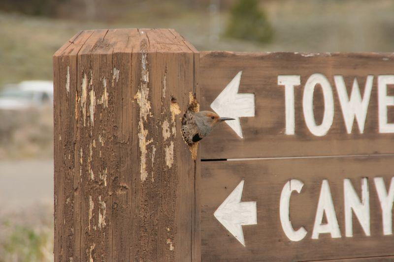 Yellowstone 5-19-10 130