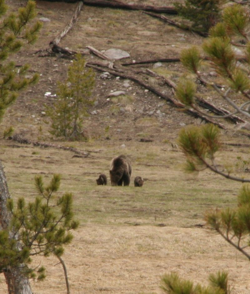 Yellowstone 5-19-10 230