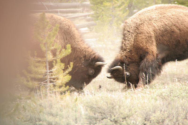 5-21-10 Leaving Yellowstone 171